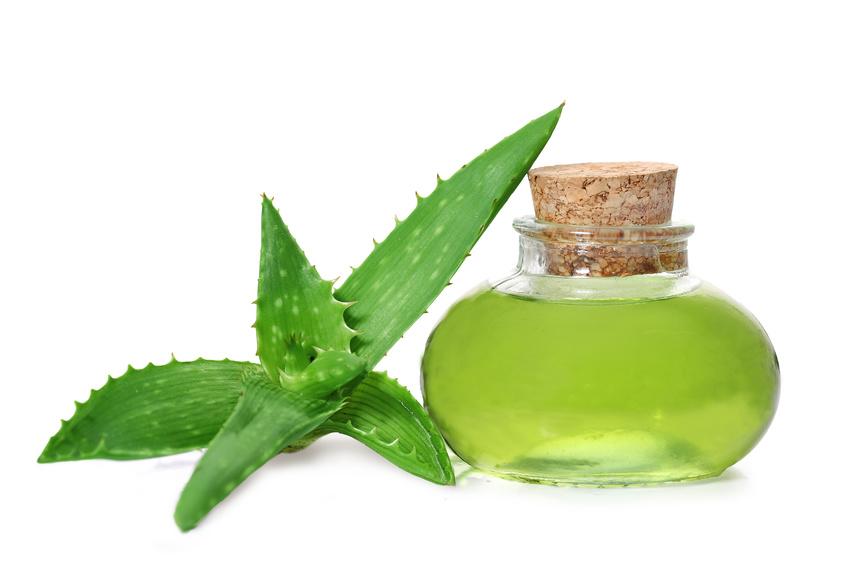 Aloe Vera Die Pflanze Für Schönheit Und Gesundheit