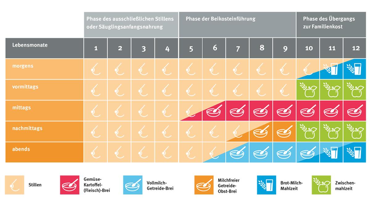 Tabelle zeigt drei Phasen der ersten 12 Lebensmonate: 1-4 ausschließliches Stillen, 5-9 Phase der Beikost, 10-12 Phase des Übergangs zur Familienkost.